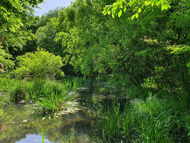 물향기수목원의 습지생태원 일대의 모습. 습지생태원에서는 습지에 서식하는 동식물을 가까이서 볼 수 있다. /사진=송경은 기자