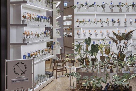 청담 분더샵에서 진행된 플랜트 소사이어티1의 식물 팝업 상점 전경. 수제 토분에 식재된 희귀식물로 큰 인기를 끌었다. 사진 플랜트 소사이어티1