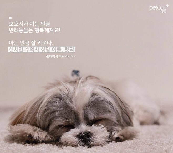 출처: 펫닥홈페이지