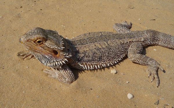 출처: Wikimedia Commons