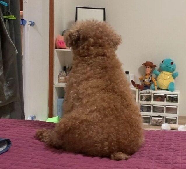 출처: 봉봄이 반려인 Instagram 'ryuly_dogcat'