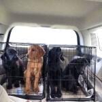 출처: https://3milliondogs.com/3-million-dogs/this-alabama-woman-has-saved-264-puppies-in-8-months/