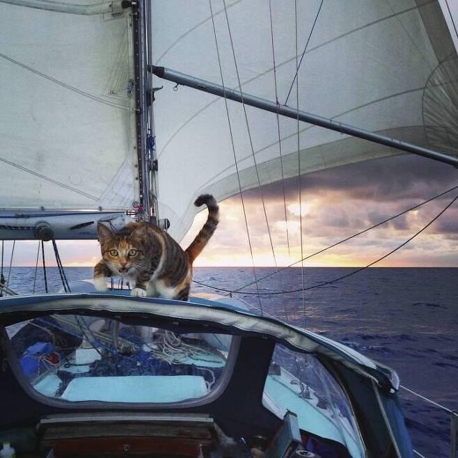출처: https://3milliondogs.com/3-million-dogs/meet-amelia-the-tropicat-who-sails-the-world-with-her-human/