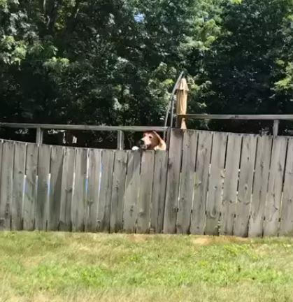 출처: https://wamiz.com/chiens/actu/maman-fils-jouer-chien-jardin-maison-video-13173.html