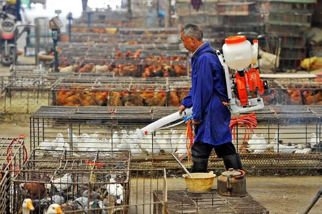2013년 중국 우한의 가축시장에서 소독을 하는 모습. 이번에 새로운 조류 인플루엔자 바이러스에 감염된 사람이 처음으로 확인됐다./AFP연합