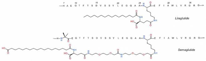 현재 비만치료제 1위인 리라글루타이드는 인체 호르몬인 GLP-1의 구조를 약간 바꿔 체내에서 잘 분해되지 않게 만든 분자다(위). 최근 비만치료제로 FDA 승인을 받은 세마글루타이드는 리라글루타이드를 살짝 더 바꿔 체내에서 훨씬 더 오래 버틸 수 있게 만든 분자로 살을 빼는 효과도 더 큰 것으로 나타났다(아래). 의약화학저널 제공