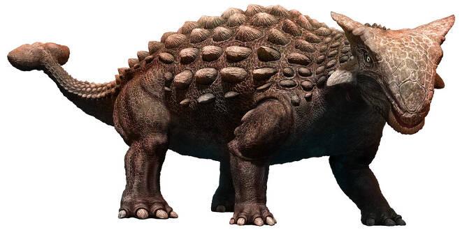 아시아와 북미에 다양한 종이 서식했던 안킬로사우루스의 모습. 작은 키와 뼈 갑옷 그리고 꼬리의 뼈 뭉치가 특징이다. 게티이미지뱅크