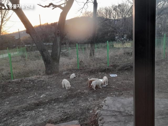 경기 과천시 갈현동 재개발지역에서 살고 있는 떠돌이개들. 많은 개들이 잡혀갔지만 경계심이 많고 머리가 좋아 아직까지 잡히지 않은 개들이다. 동물자유연대 제공